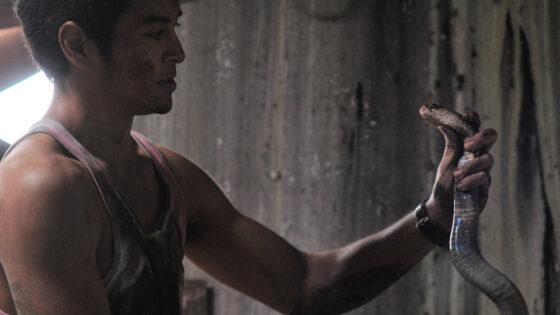 The Intruder 2010 Killer Snake Movie